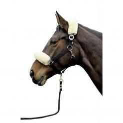 nos och nackludd på häst i naturfärg