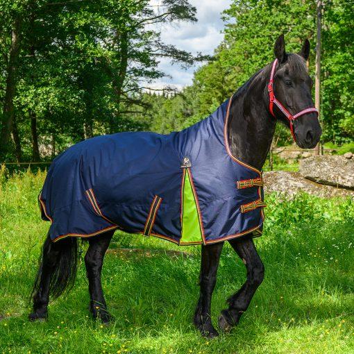 Regn och övergångstäcke 100gr figaro på häst med grönt gräs som bakgrund.